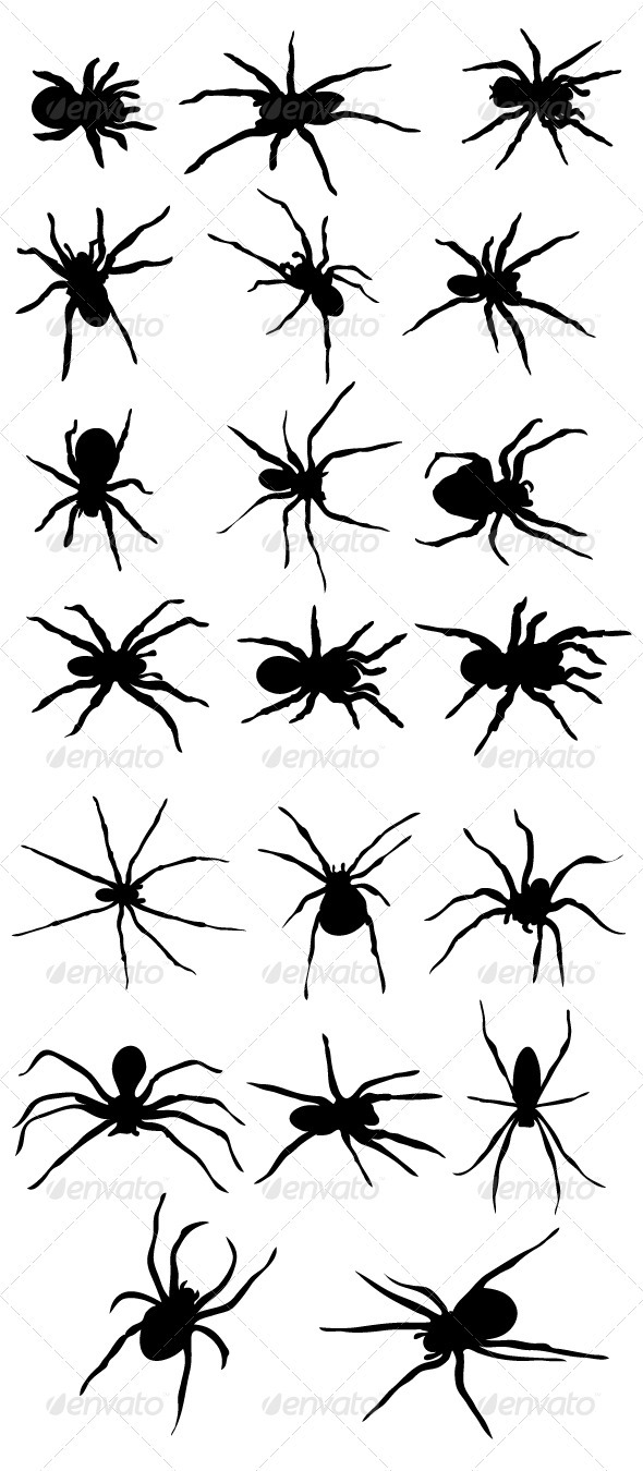 Scary Black Spider Silhouette