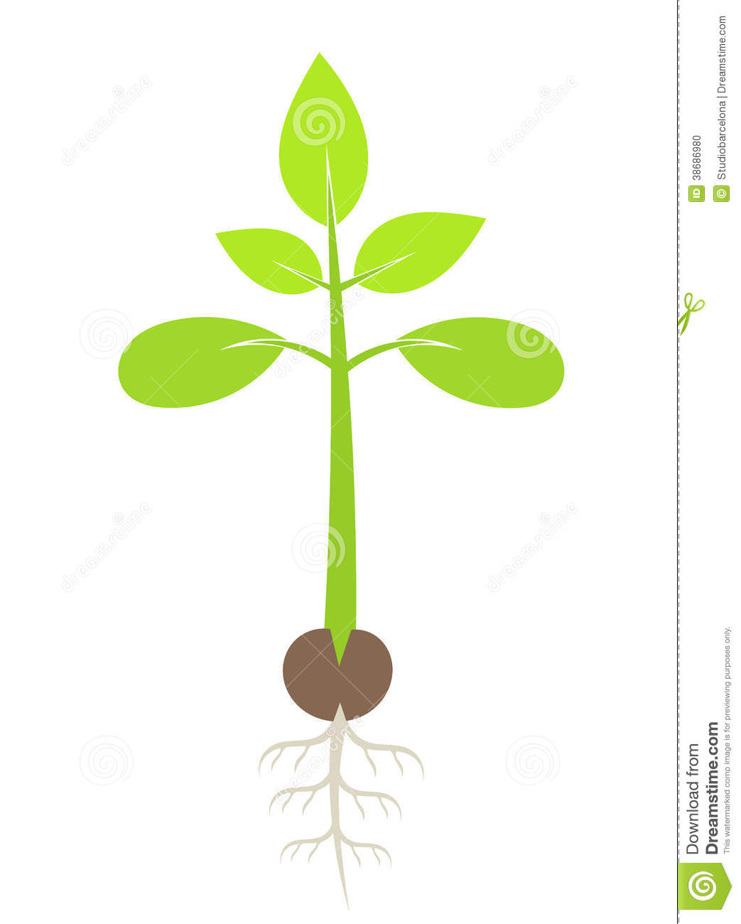 Seedling Flower Illustration