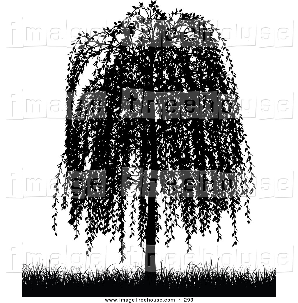 Weeping Willow Tree Black and White