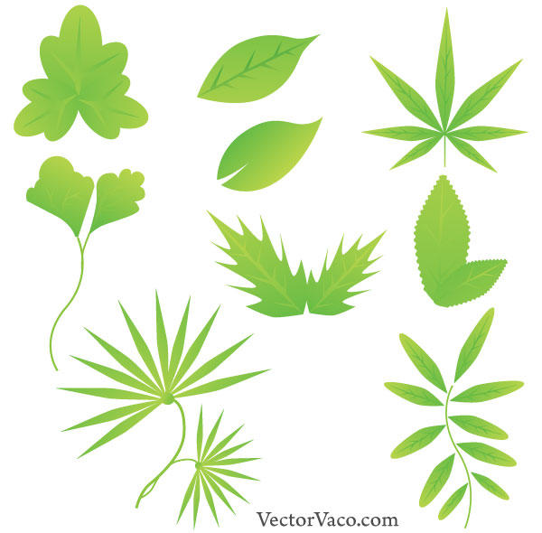 Green Leaf Vector Free Download