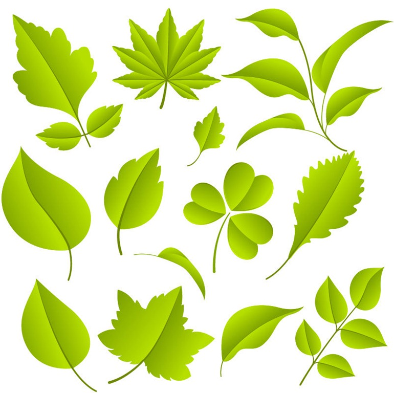 18 Green Leaves Vector Images
