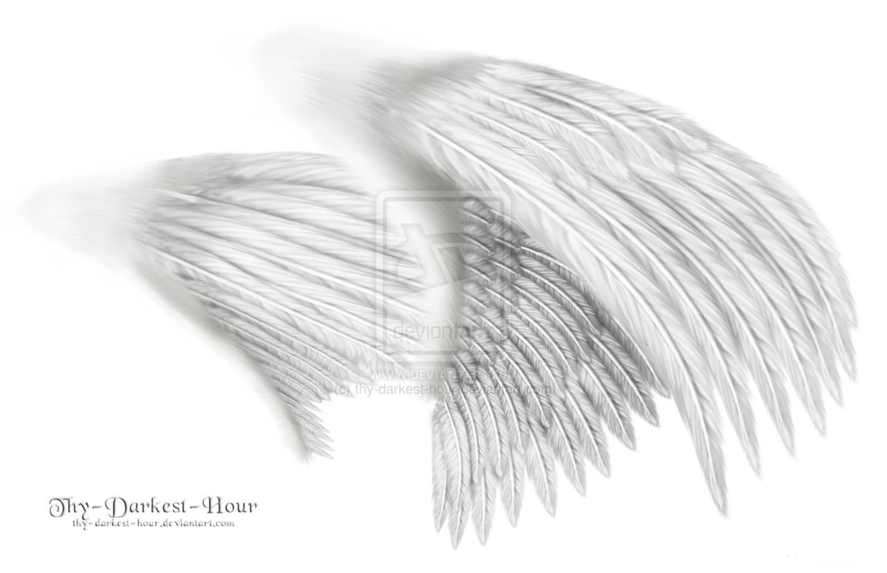 19 White Wings PSD Images