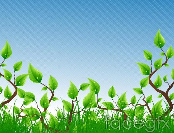Green Leaf Vine Plants
