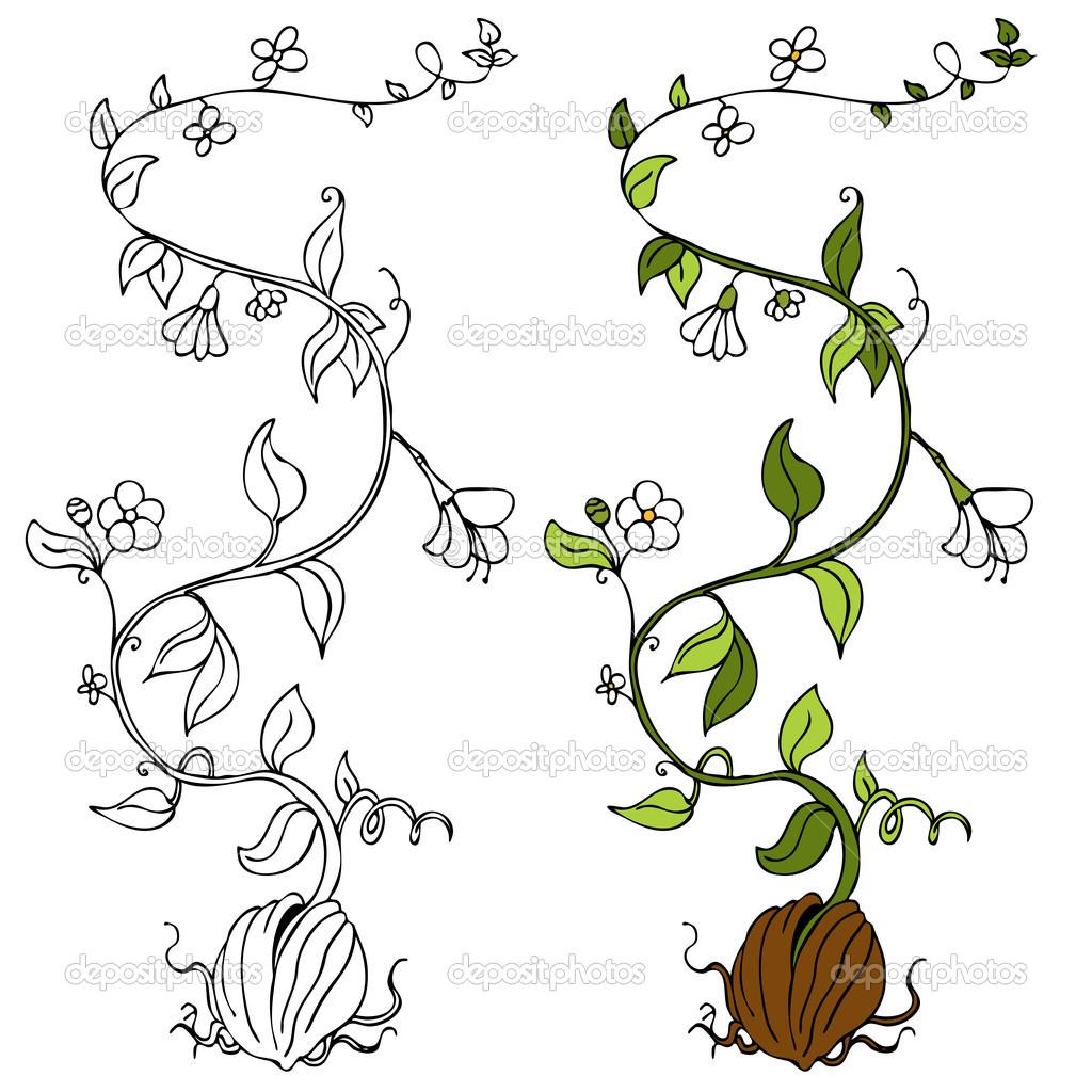 Plant Vines Drawings