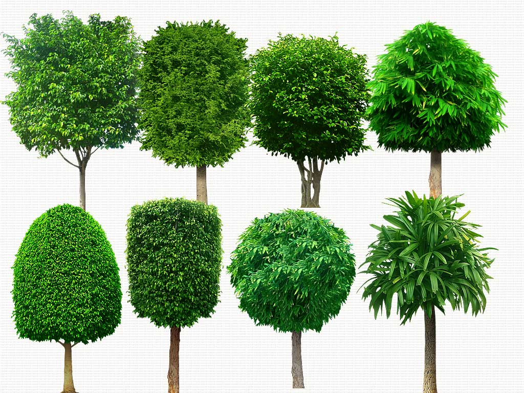 17 PSD Trees Plants Images