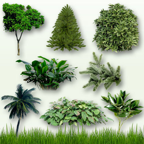 Grass Bushes and Trees Clip Art
