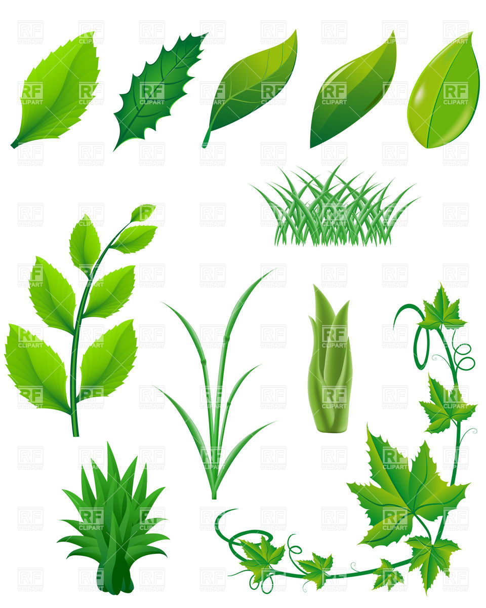 Green Leaf Plant Clip Art