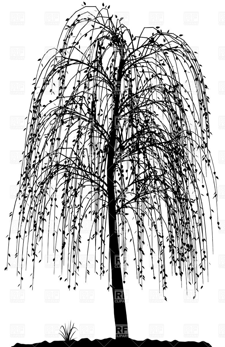 13 Willow Tree Vector Images