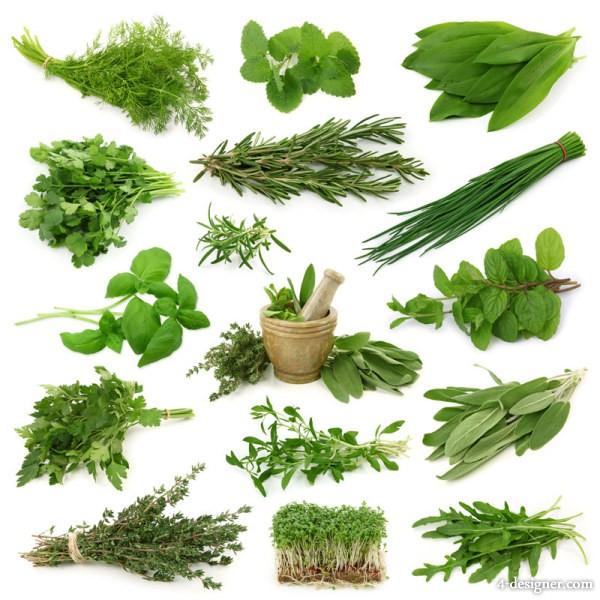 12 Herb Plant PSDs Images