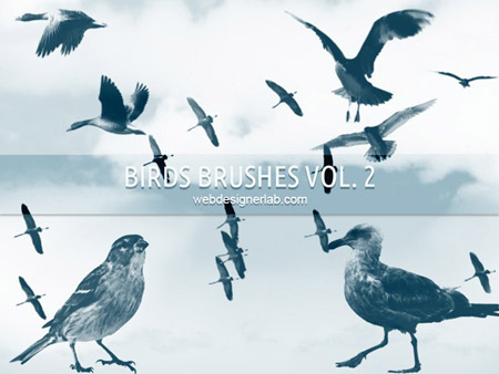 5 Photoshop PSD Bird Images