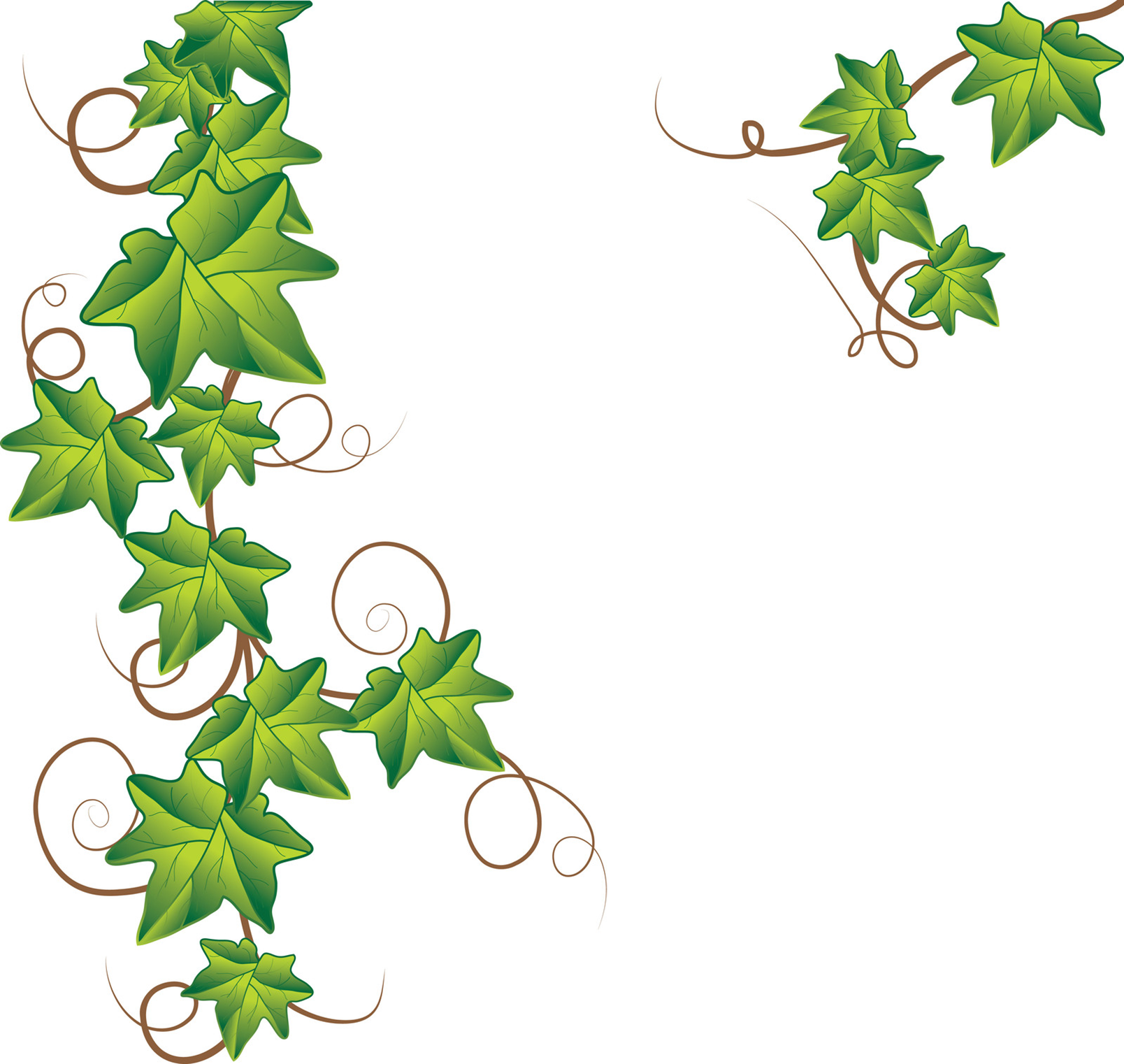 10 Ivy Leaf Vector Images