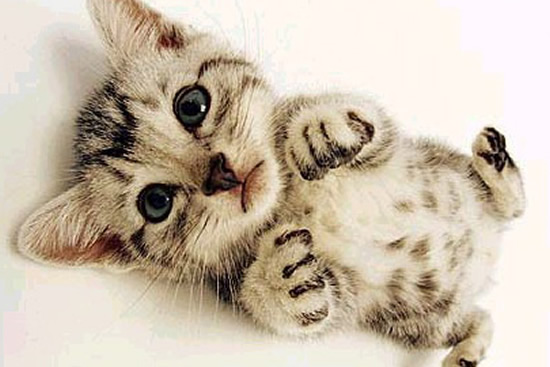 13 Baby Animal Photos Great Images
