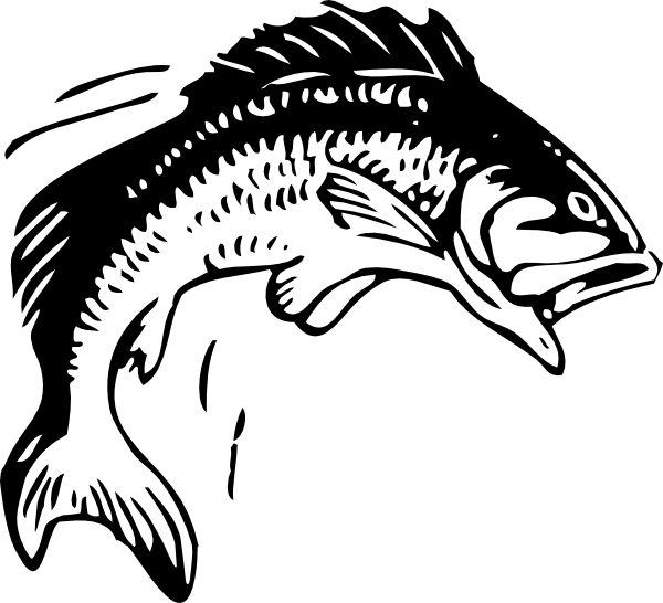 8 Jumping Fish Vector Images