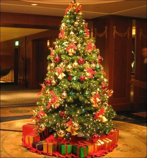 16 Christmas Tree Photography Images