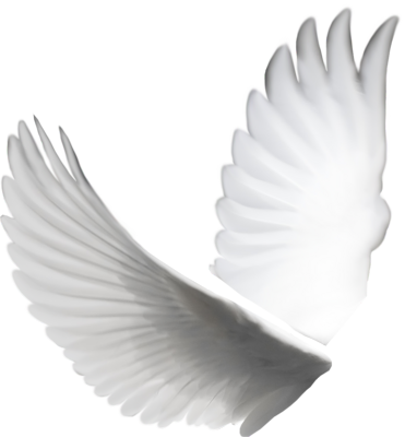 11 White Doves PSD Images