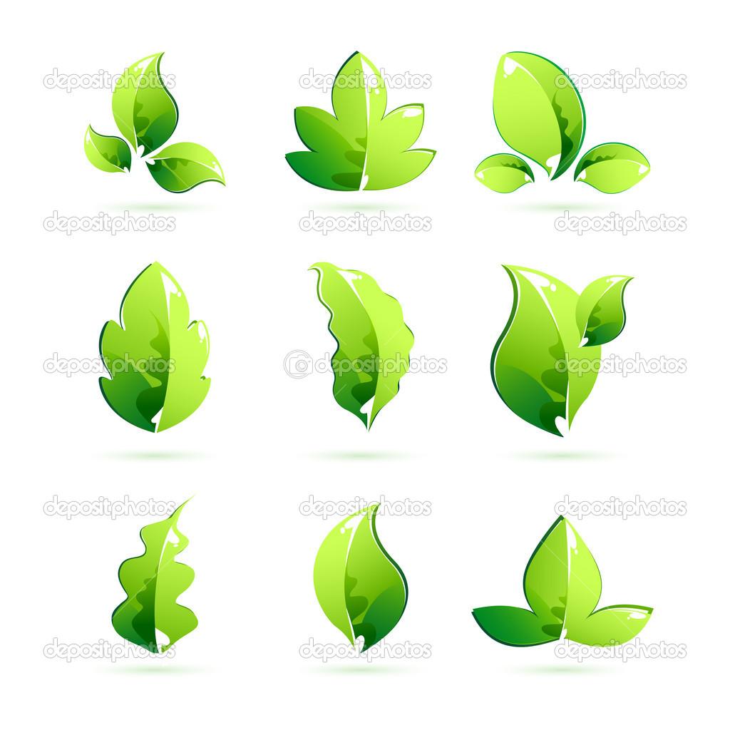 Different Leaf Shapes