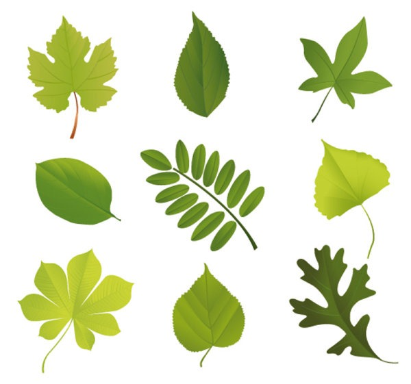 18 Leaf Shapes Photoshop Images