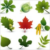 Leaf Forms Shape