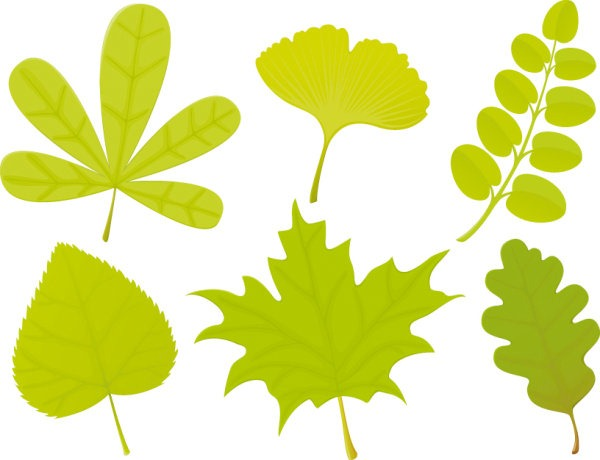 Leaf Shape Vector Graphic
