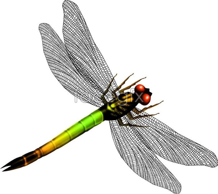 Dragonfly Graphic Design