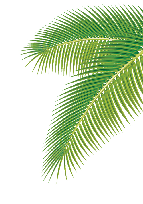 17 Palm Leaf Vector Images