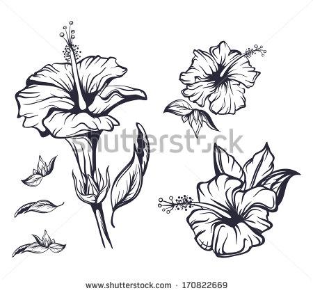 15 Hawaiian Flower Outline Vector Images - Hawaiian Flower ...