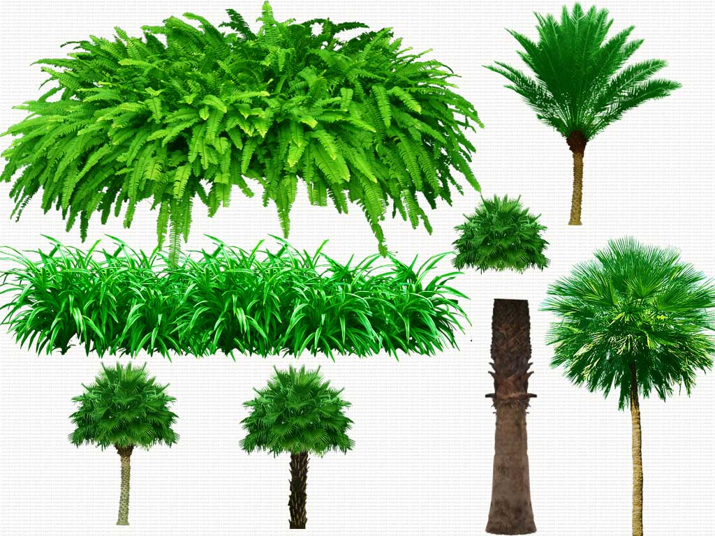 12 Tree PSD Free Download Images