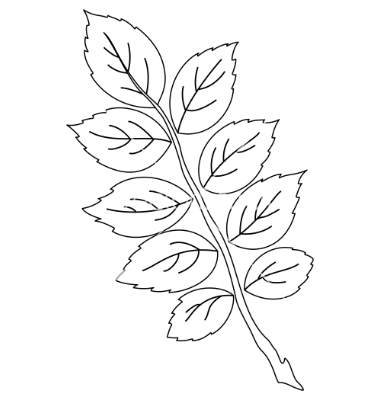 Rose Outline with Leaves Vector