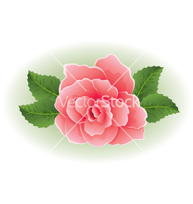 Rose with Leaf Vector