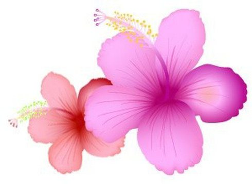 Summer Flowers Clip Art Free