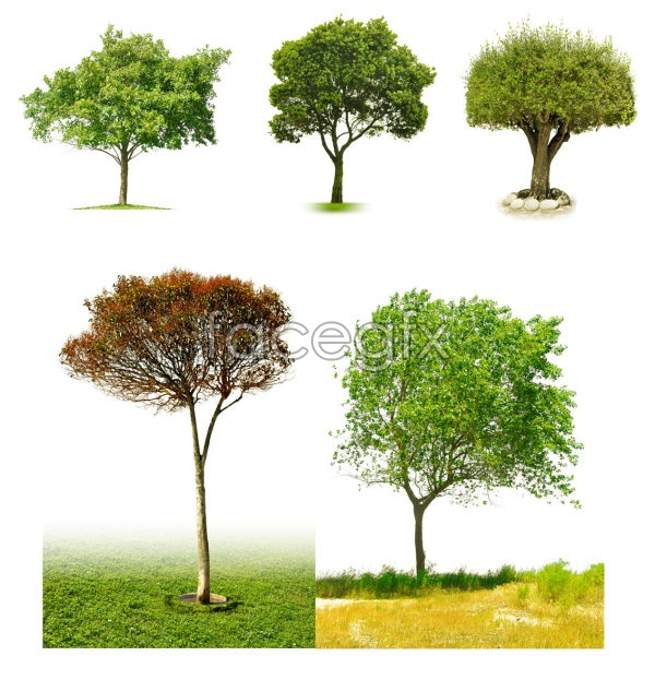 Tree PSD File
