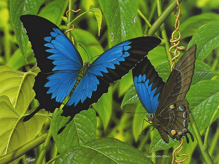 Wildlife Painting of Butterfly