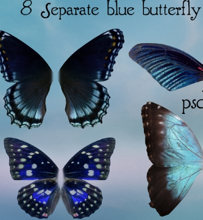 Butterfly Wing PSD