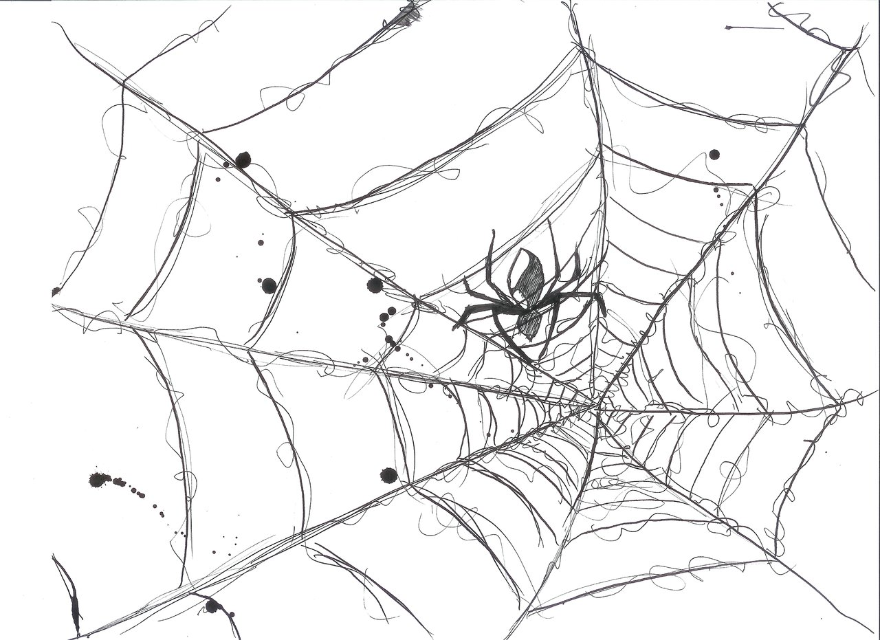 Spider Web Corner Transparent