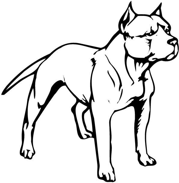 10 Pit Bull Vector Art Images