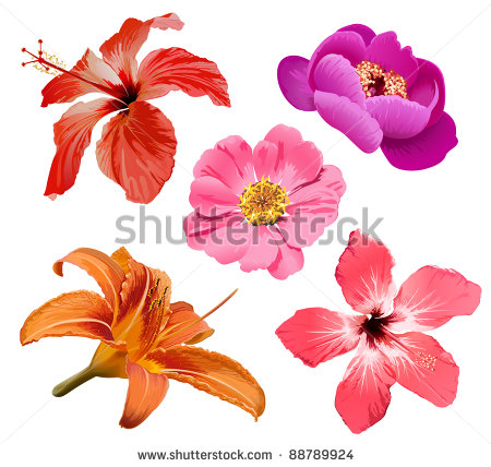 10 Tropical Flower Vector Images
