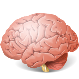 12 Brain Icon Type PNG Images