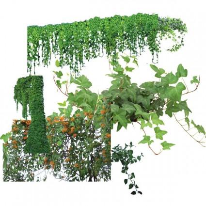 Photoshop Vine Plant
