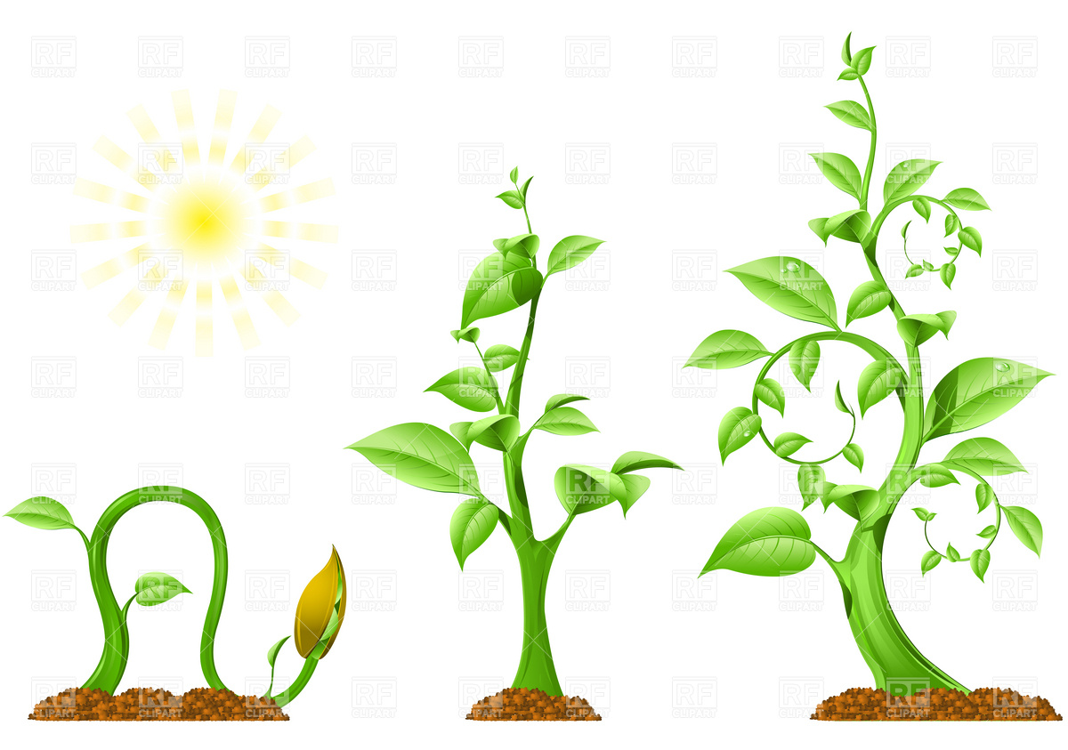 17 Flower Growing Vector Images