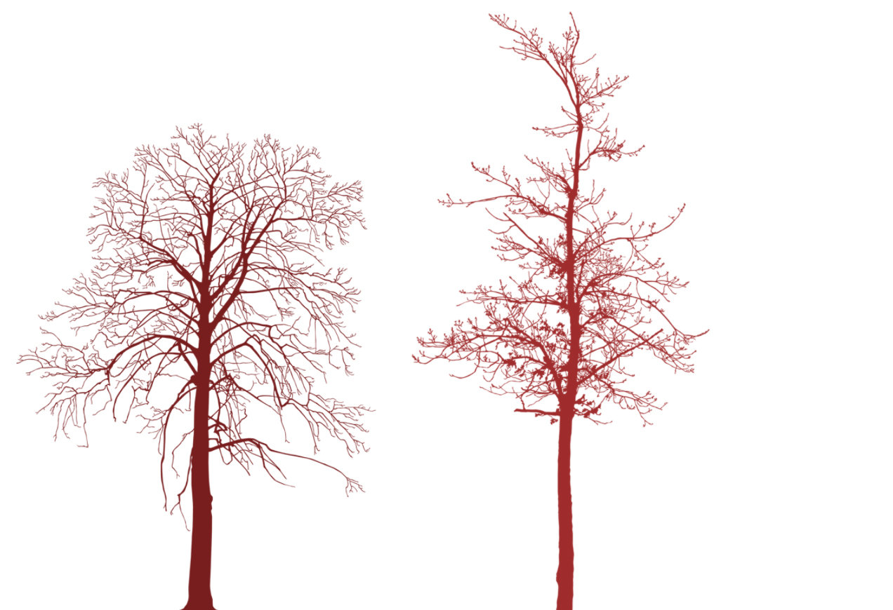 Tree Photoshop Brushes Transparent