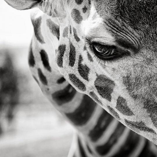 12 Black And White Animal Photography Images