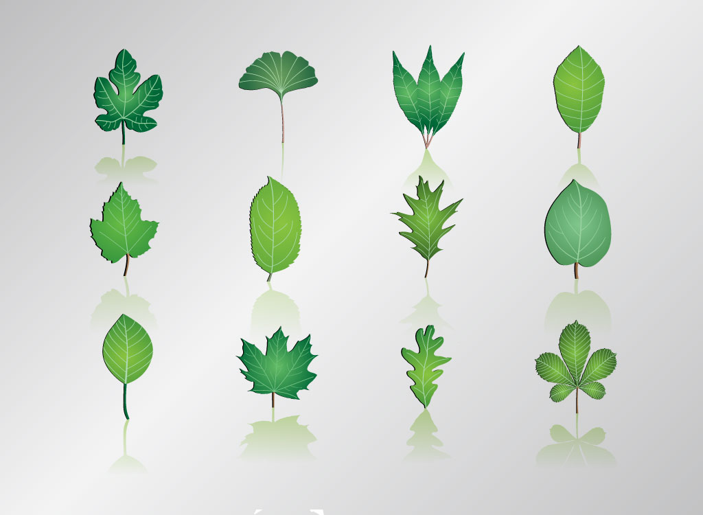 Leaf Graphic Vector Art
