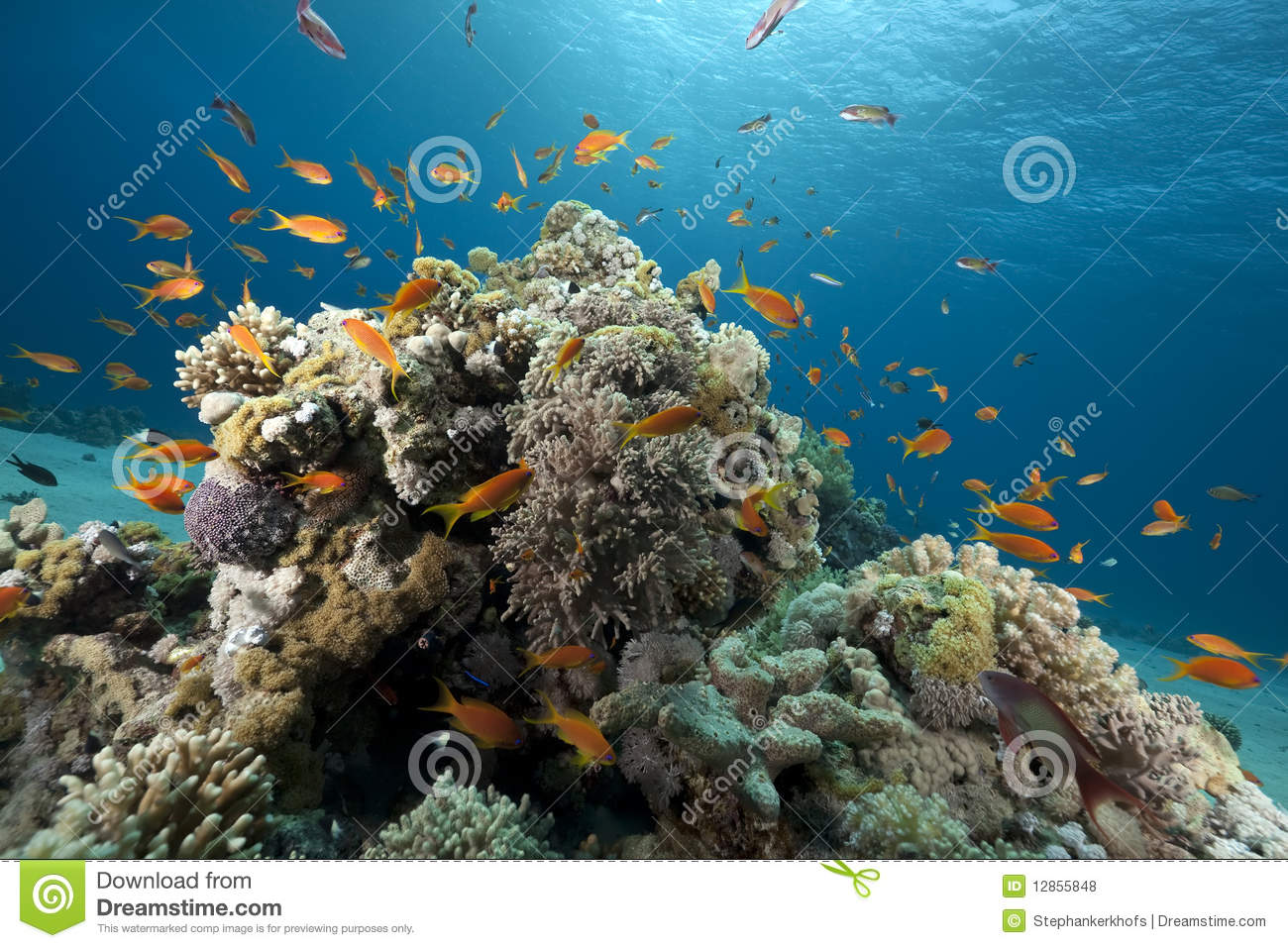 10 Coral Royalty Free Stock Photos Images