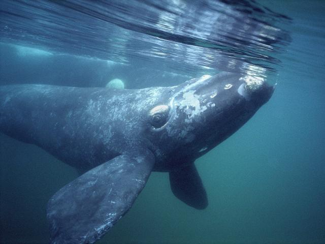 13 Whale Stock Photography Images