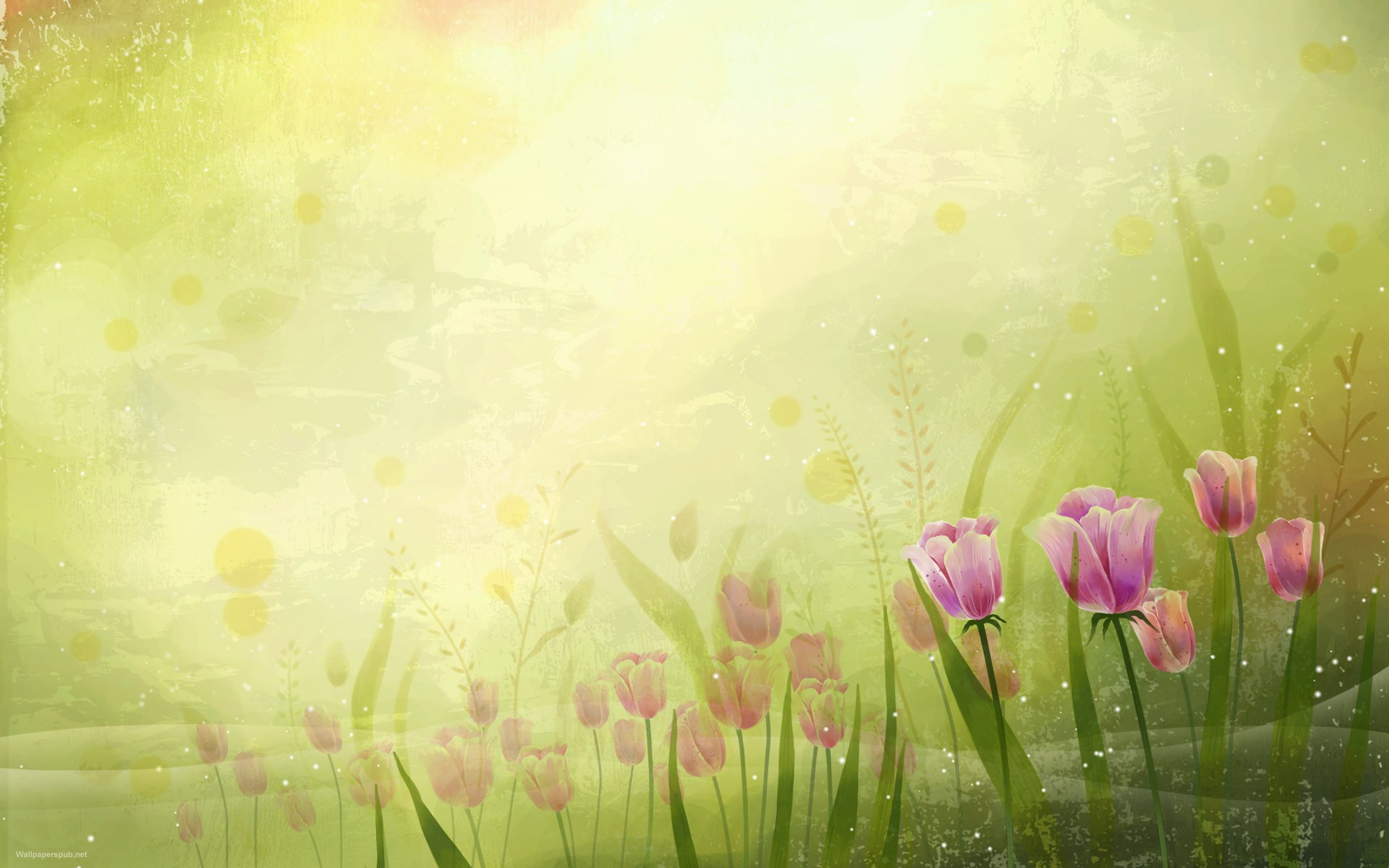 Beautiful Flowers Desktop Wallpapers and Backgrounds