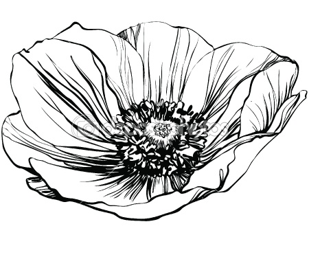 Black and White Poppy Flower