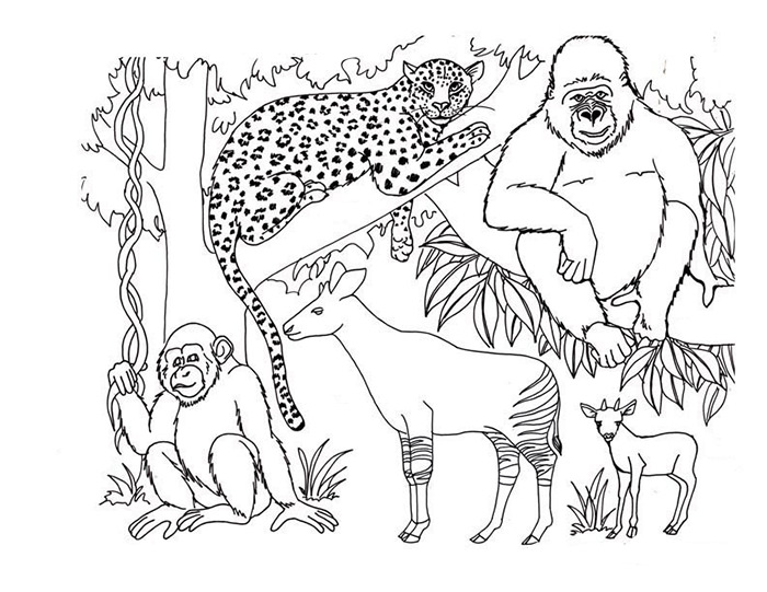 Rainforest Animal Coloring Pages Printable