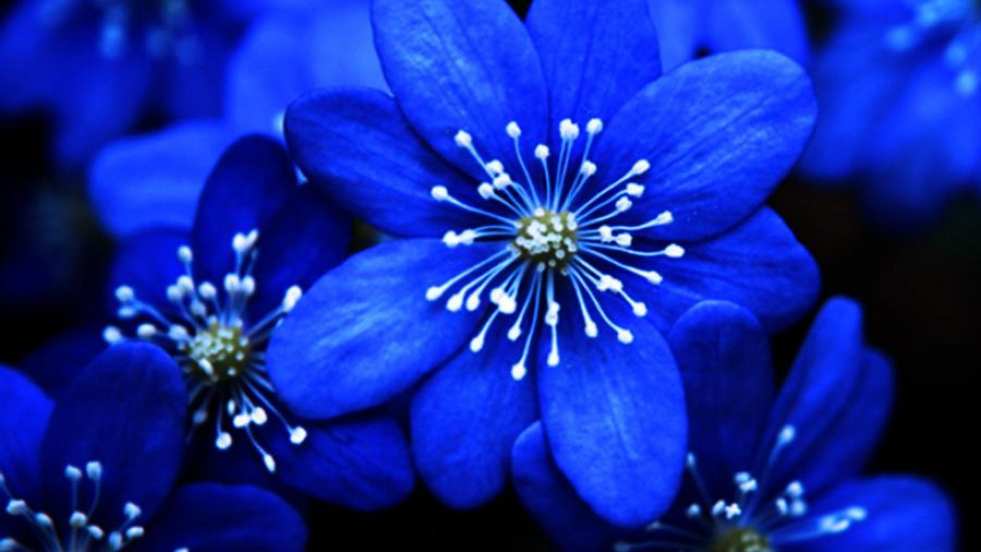 Blue Flowers as Backgrounds