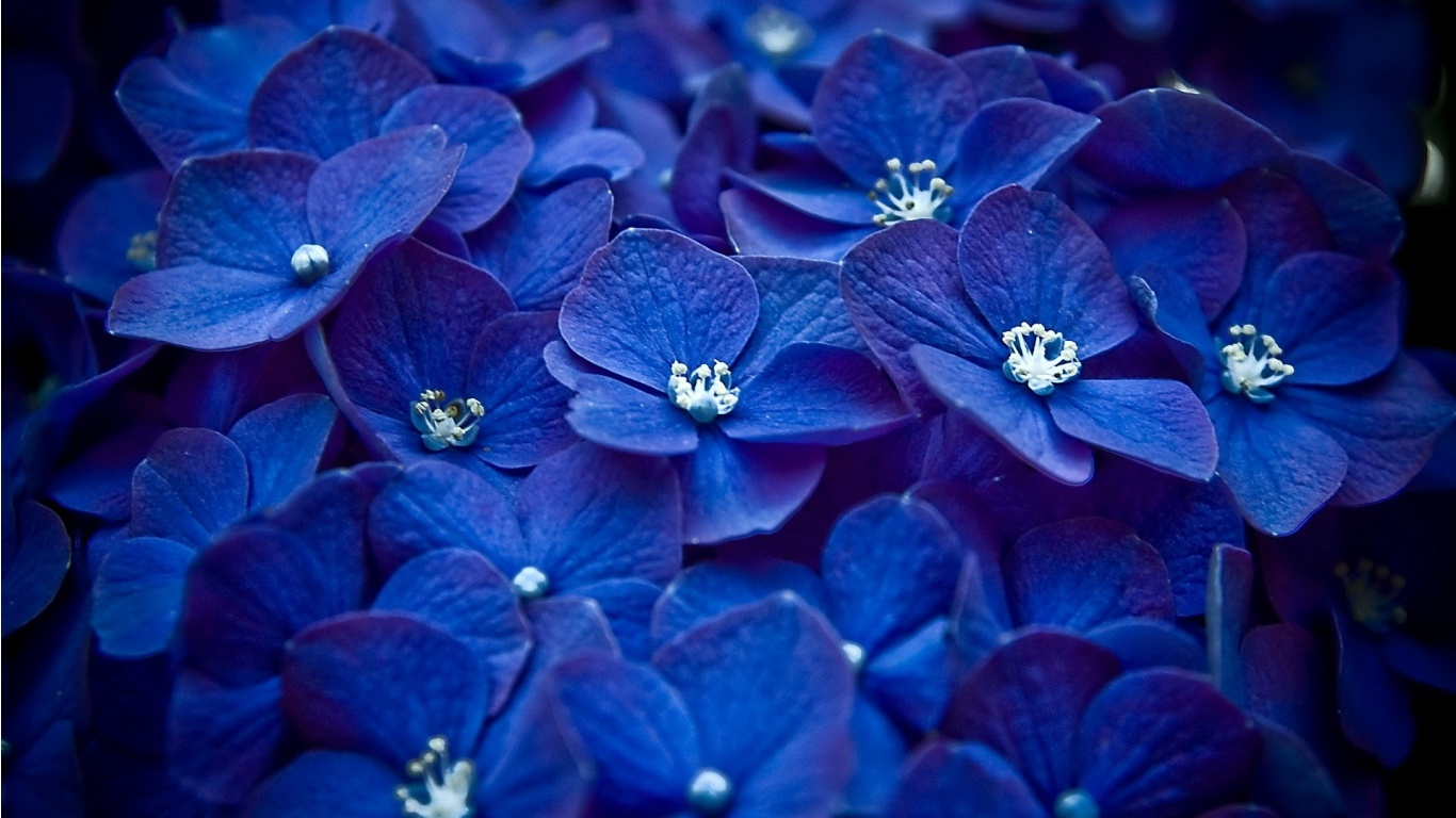 16 Blue Flower Photography Images