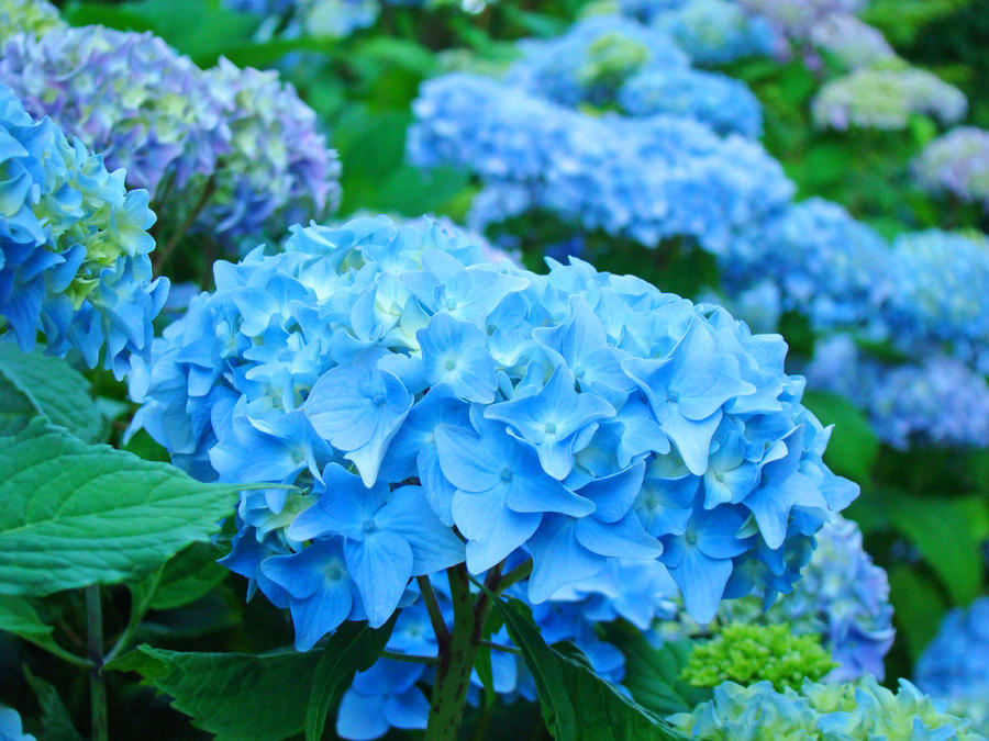 Blue Summer Flowers Garden